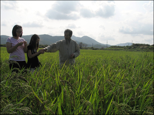 강대인 농부 아저씨께서 벼의 껍질을 까서 예슬이한테 주었다. 쌀이 빨강색이었다.