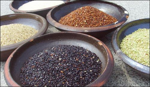 강대인 씨가 수확한 다섯 가지 색깔의 쌀. 이른바 '오색미'다.