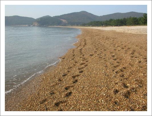 콩돌해안  콩알만한 둥근돌이 쌓여있는 유네스코 보존물로 지정된 보물해안이다.