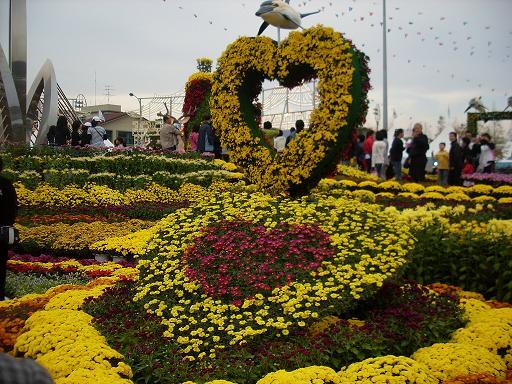 국화꽃 축제 ...