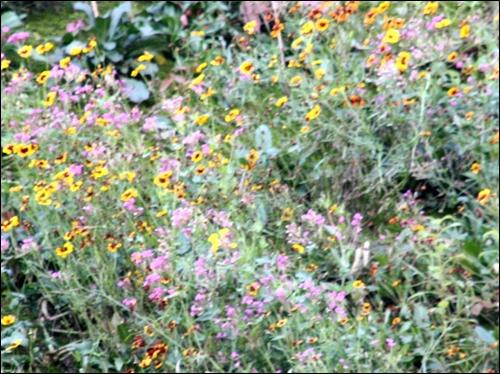 한계령 절개지에 피어난 곱고 예쁜 꽃들