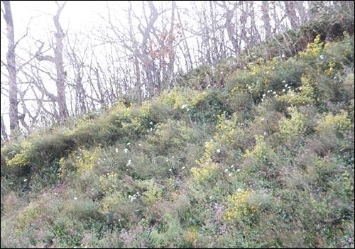 앙상한 나무들 아래 자락에 피어난 꽃들