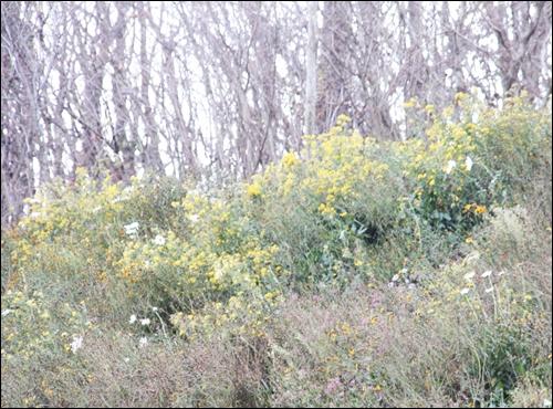 나목 능선 아래 절개지에 흐드러진 꽃들