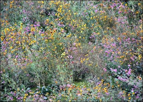 화려한 꽃밭