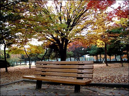'우수수' 떨어지는 낙엽따라 겨울이 왔다 - 오마이뉴스