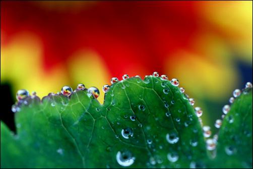 물방울마다 새겨진 꽃 맑은 물방울에 새겨진 꽃