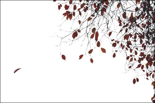 낙엽 가을바람에 이별을 하는 낙엽 하나