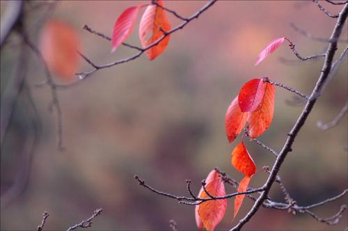 정열 붉게 타는 단풍잎이 정열을 뿜고 있다. 인생도 저렇게 정열을 뿜으며 살고 싶다.
