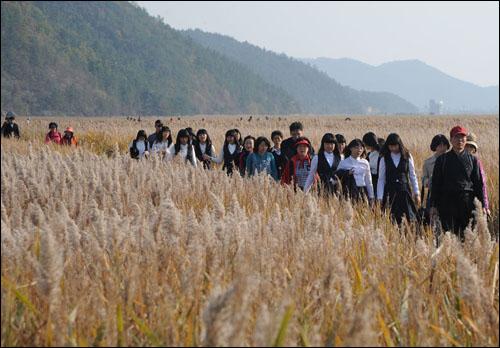 순천만 갈대밭을 둘러보는 탐사객들.