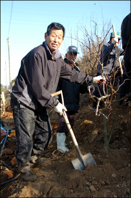 연산황토대추작목반 이영근 회장  연산황토대추작목반 이영근(61세) 회장이 작목반 조합원들과 대추나무를 심고 있다.
