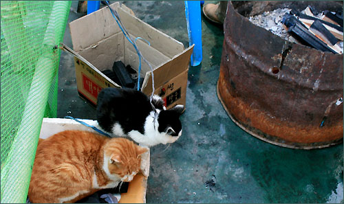 사람들이 도란도란 모여 있는 모닥불 곁에는 고양이 녀석이 꾸벅꾸벅 졸고 있습니다.