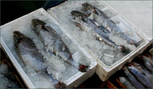 민어의 얼큰한 매운탕은 시원한 국물 맛이 아주 그만입니다. 속이 확 풀리고 민어의 부드러운 속살은 입안에서 살살 녹아듭니다