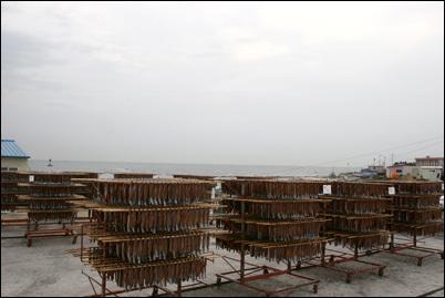 구룡포 앞 바다의 과메기덕장. 북서쪽에서 불어오는 차갑고 건조한 겨울바람과 동해바다에서 불어오는 해풍이 만나 맛있는 과메기를 만들어낸다.