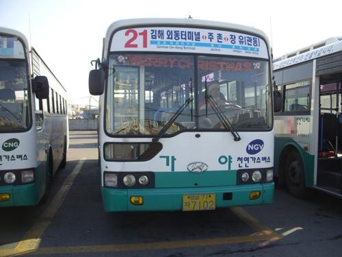 """김해에서도 """"징글벨 징글벨""""~~ 김해 가야IBS 김해21번. 이 버스도 """"산타버스""""를 운영한다."""