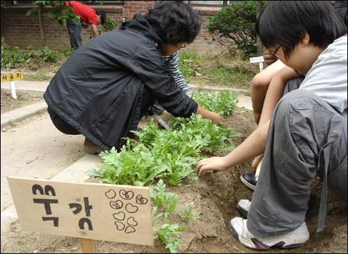 텃밭을 가꾸는 면동초 어린이들