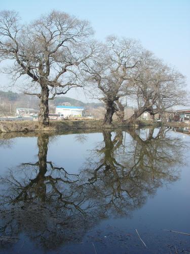 후산 생태마을 입구의 연못 실루엣