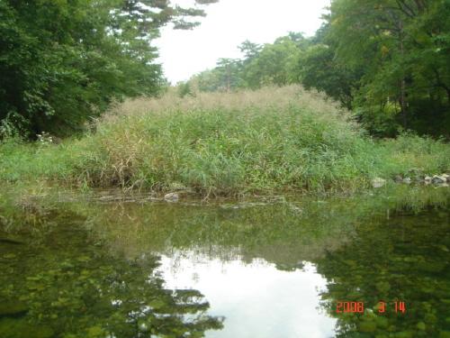 갈대 연못에 드리워진 갈대