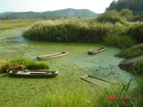 우포늪의 여름 우포늪의 여름은 초록융단이다.