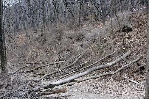 시공사와 용역업체 직원들이 강행한 벌목 현장