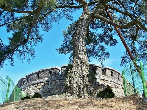 강화도 해안을 지키는 돈대와 오래된 소나무가 역사의 흔적을 보여줍니다.