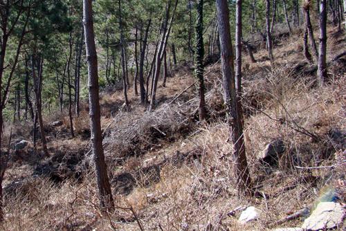 나무가지를 보니, 어릴 적 산에 나무하러 다니던 때가 떠올랐지요.