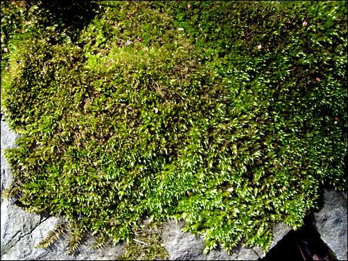 콘크리트와 아스팔트로 뒤덮힌 마을에서 흔했던 이끼마저 볼 수 없다.