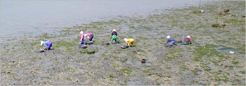갯벌 모래밭에서는 아낙네들이 바지락을 캐고 있습니다.