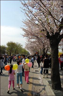 벚꽃 축제를 찾은 어린이들.