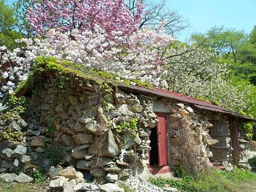 수수하고 아담한 절 개심사는 지금 색색의 벚꽃들로 덮여 있어 절이 아니라 꽃대궐이랍니다.
