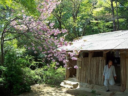 신록의 나무들과 벚꽃이 어우러져 해우소마저 정겨워 보입니다.