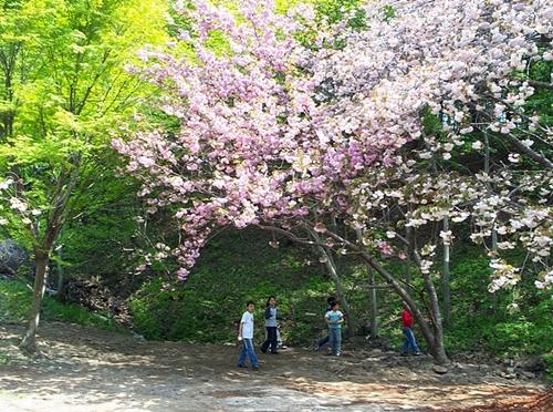 초록의 나뭇잎들과 벚꽃의 고운색이 절이 아니라 한복집에 온 것 같아요.