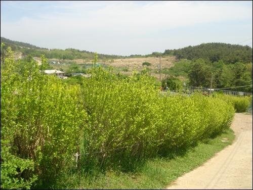풍경 이 된 마을