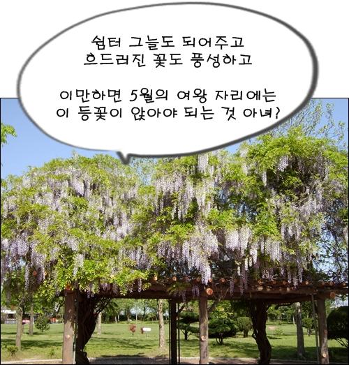 흐드러진 등나무꽃