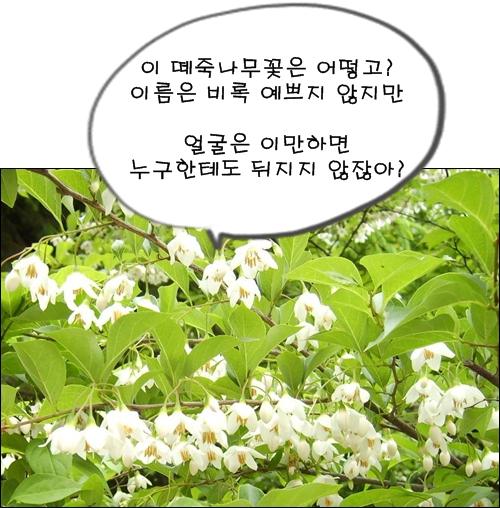 귀여운 모습의 떼죽나무꽃