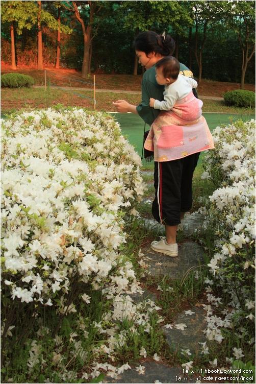 아파트 꽃밭을 함께 거닐고 바람을 쐬면서 사진을 찍습니다. 옆지기나 아기는 사진에 찍히건 말건 아랑곳하지 않고 꽃내음을 즐기고, 저는 한두 걸음 뒤에 떨어져서 거닐면서 이야기를 나누는 사이사이 사진기 단추를 누릅니다.