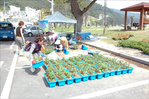 꽃 사랑 실천운동 5월 29일 일운면 관내 펜션 업주 100여 명에게 제라늄꽃이 심겨준 화분을 나누어 주고 있다