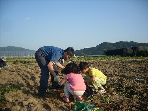 물금 모래감자밭 어린 조카들이 고모부랑 함께 감자를 캐며 좋아하고 있다...