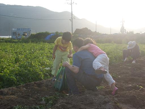 물금 모래감자밭... 감자밭에서 감자를 캐다가 고모부 등에 업히는 조카 지혜...