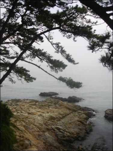 솔밭 사이로 떠다니는 섬, 그리고 바다