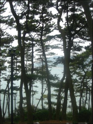 쭉쭉 뻗은 해송숲