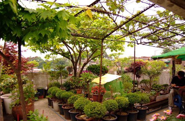 모아빌라 정원. 10평도 안 되는 공간에 각종 화초와 과실나무, 오리까지 함께 살고 있다. 옆에는 쉬면서 차를 마실 수 있는 테이블까지 갖췄다.
