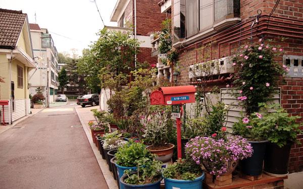 주차장 대신 꽃밭. 윤 씨네 정원에 꽃이 만발하면 사람들도 돌아가 이 길로 지나간다.
