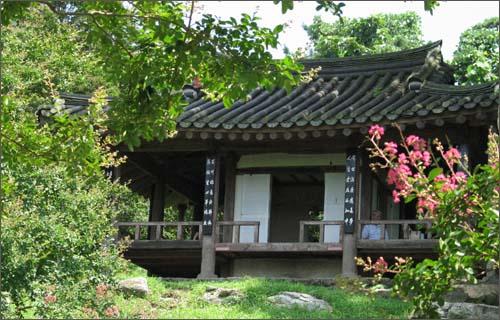 목백일홍이 피기 시작한 명옥헌원림. 조선시대 대표적인 민간정원 가운데 하나다.