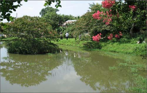목백일홍을 보기 위해 명옥헌원림을 찾고 사람들이 연못 주변을 돌며 꽃을 감상하고 있다.