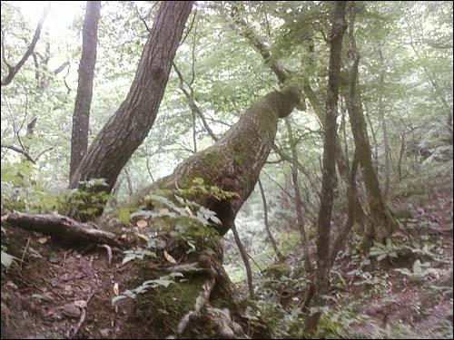 거목은 쓰러져서도 생명이 다할 때까지 잎을 자라게 한다