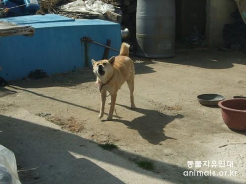 진도 내의 개들은 대부분 혼자 묶여 살고 있다. 이런 생활은 활발한 진도개의 스트레스와 공격성을 발전시키고 사람들과의 친화성을 막는다. 경제적 심리적으로 개들을 감당할 수 없는 주민들은 이런 개들을 업자에게 팔고 있다.