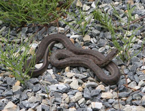 이 뱀의 이름은 무엇일까요? 가늘고 긴 몸집을 가지고 있다. 정확한 이름은 알지 못한다.