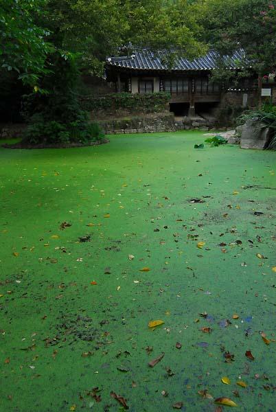 남간정사 연못과 숲에 에워싸인 남간정사의 모습. 우리나라 양반 정원 건축의 백미로 손꼽히는 곳이지만, 찾는 발길이 뜸해 을씨년스럽다.