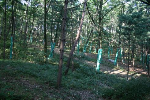 참나무 시들음병 2차 방제사업 상당히 많은 나무들에 시들음병 방제를 위한 설치를 해 놓은 것을 볼 수 있다.