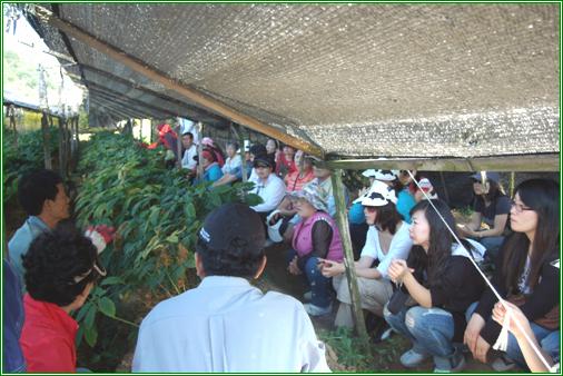인삼밭에서 설명을 듣고 있는 관광객들 금산인삼축제에 왔다 홍도마을로 체험을 온 관광객들이 캐기에 앞서 설명을 듣고 있다